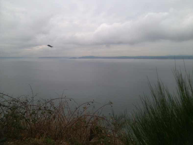 Viewpoint at Discovery Park